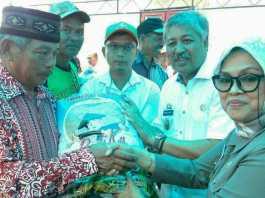 Pemprov Sulsel Salurkan 10 Ton Bibit Pertanian Korban Banjir di Pinrang
